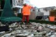 Свыше 150 тысяч тонн рыбы выловили архангельские рыбаки в 2014 году — Экономика — Новости Архангельска